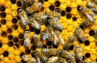 Идея для бизнеса — пчеловодство