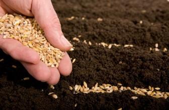 Подготовка семян овощей к посеву